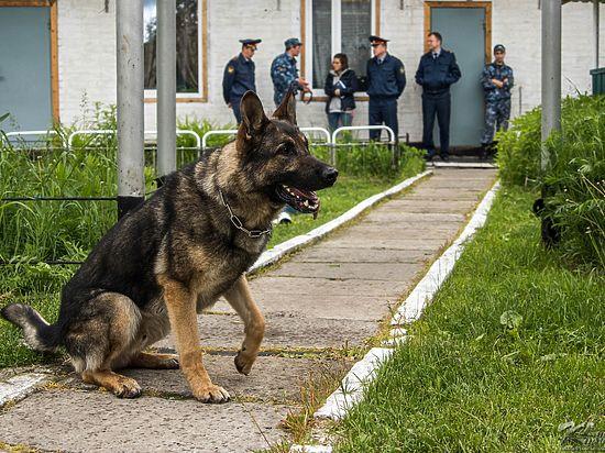 Как живут и работают с людьми самые серьезные собаки Карелии