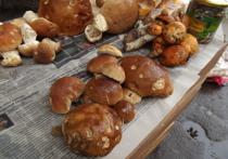 Сколько в Петрозаводске стоят дачные ягоды и лесные грибы