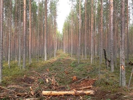 Ученые уверены: Лесной кодекс помогает уничтожать, а не сохранять лес
