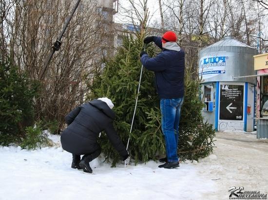 В карельском Заксобрании предлагают разрешить людям рубить елки самостоятельно
