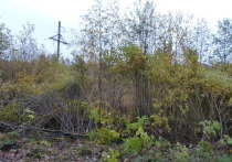 Заповедник «Кивач» через суд обязали вырубить лес под проводами